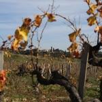 Vignes Chateauneuf du Pape